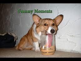 dog peanut butter dogs peanut butter compilation 2015 hd
