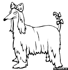 afghan hound dog coloring coloring 4paws