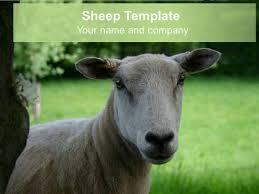 presentation magazine animal powerpoint templates