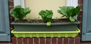gardening in self watering planters u0026 containers albopepper com
