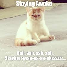 Meme Sleepy - lolcats sleepy lol at funny cat memes funny cat pictures with