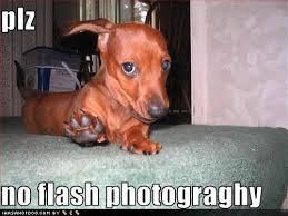 Wiener Dog Meme - 15 funny dachshund photos