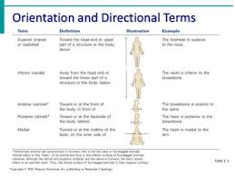 answer the question being asked about anatomy directional terms game