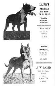 american pit bull terrier history ukc american pit bull terriers akc american staff u0027s ukc apbt u0027s