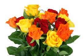 colorful rose bouquet free stock photo public domain pictures
