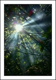 free images nature forest branch sun white