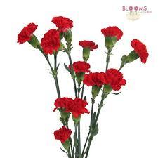 carnations in bulk carnation stems citys home