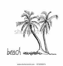 royalty free hand drawn palm trees sketch set u2026 348850835 stock