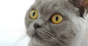 cats afterpains what does a cat owner need to be aware of before during and after