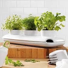 Indoor Herb Garden Kit Vibrant Idea Indoor Garden Kits Stunning Decoration Indoor Herb