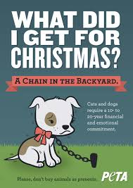 5 reasons never to give a puppy or kitten as a christmas gift peta