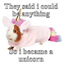 Unicorn Meme - they said i could be anything so i became a unicorn meme meme rewards