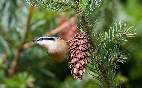 christmas bird count audubon