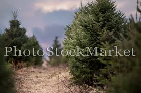 tree farm digital background 61 new