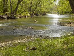 rivers simplicity water peaceful green streams nature rivers