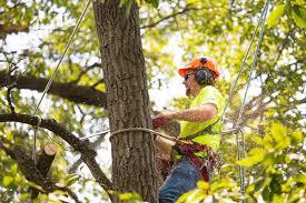 tree service fredericksburg va 540 356 3722 local tree pros