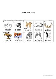 34 free esl animal body parts worksheets