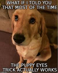 Puppy Eyes Meme - puppy eyes memes imgflip