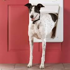 10 high tech gadgets you and your pet will love family handyman