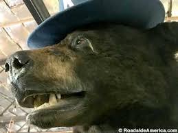 Bear Cocaine Meme - cocaine bear lexington kentucky