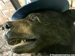 Coke Bear Meme - cocaine bear lexington kentucky