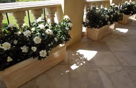 Gardenia Topiary Famous Gardens Collection Make Be Leaves