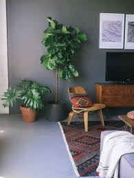 contemporary living room with indoor plants stunning indoor