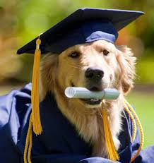 dog graduation cap 23 quotes for graduates retold by cats and dogs