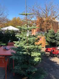 Planting Christmas Tree Seedlings Christmas Trees The Plant Foundry