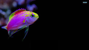 free wallpapers featuring tropical colorful fishes colorful