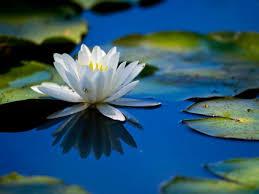96 best flowers u0026 gardens images on pinterest flower beds