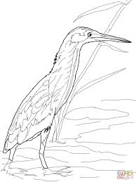 yellow bittern coloring page free printable coloring pages