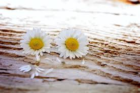 wood flowers free photo pair wildflowers wood flowers max pixel