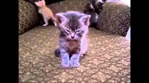 evil kittens youtube