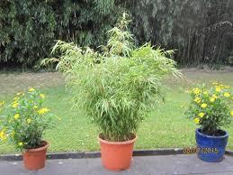 pflanzkasten mit sichtschutz rahmen weide in einem garten boisholz sichtschutz aus