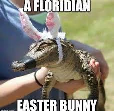 Alligator Memes - a floridan easter bunny baby alligator meme memes pinterest