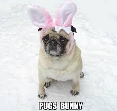Cute Easter Meme - simple cute easter meme kayak wallpaper