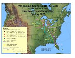 Duck Migration Map Journey North Whooping Crane Spring 2004