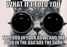 Morpheus Cat Meme - cat morpheus memes quickmeme
