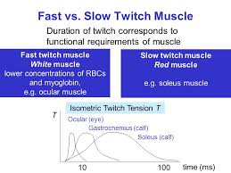 Muscle Spasms Versus Muscle Twitching by Muscle Mechanics Twitch Tetanus Isometric Contraction Ppt Video