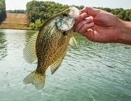 crappie in small ponds missouri department of conservation