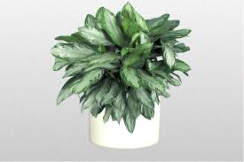 plants for low lighting areas just plant designers inc