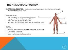 Directional Terms Human Anatomy 1 Anatomical Positions