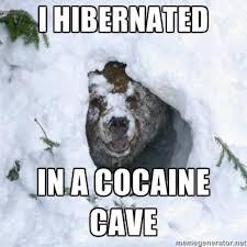 Bear Cocaine Meme - i fucking love cocaine cocaine bear know your meme