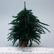 make a dollhouse trees from lycopodium moss