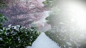 japanese garden in winter sun shining between trees hd video