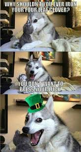 Pun Dog Meme - pin by joanna mccoy on husky funnies pinterest pun dog worst