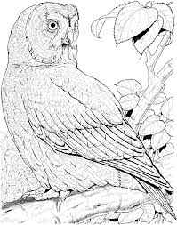 great horned owl coloring pages for kids animal coloring pages