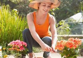 Gardening Tips For Summer - flower gardening tips for summer kerala latest news kerala
