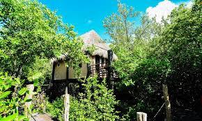manglex tulum beautiful jungle cabanas in tulum